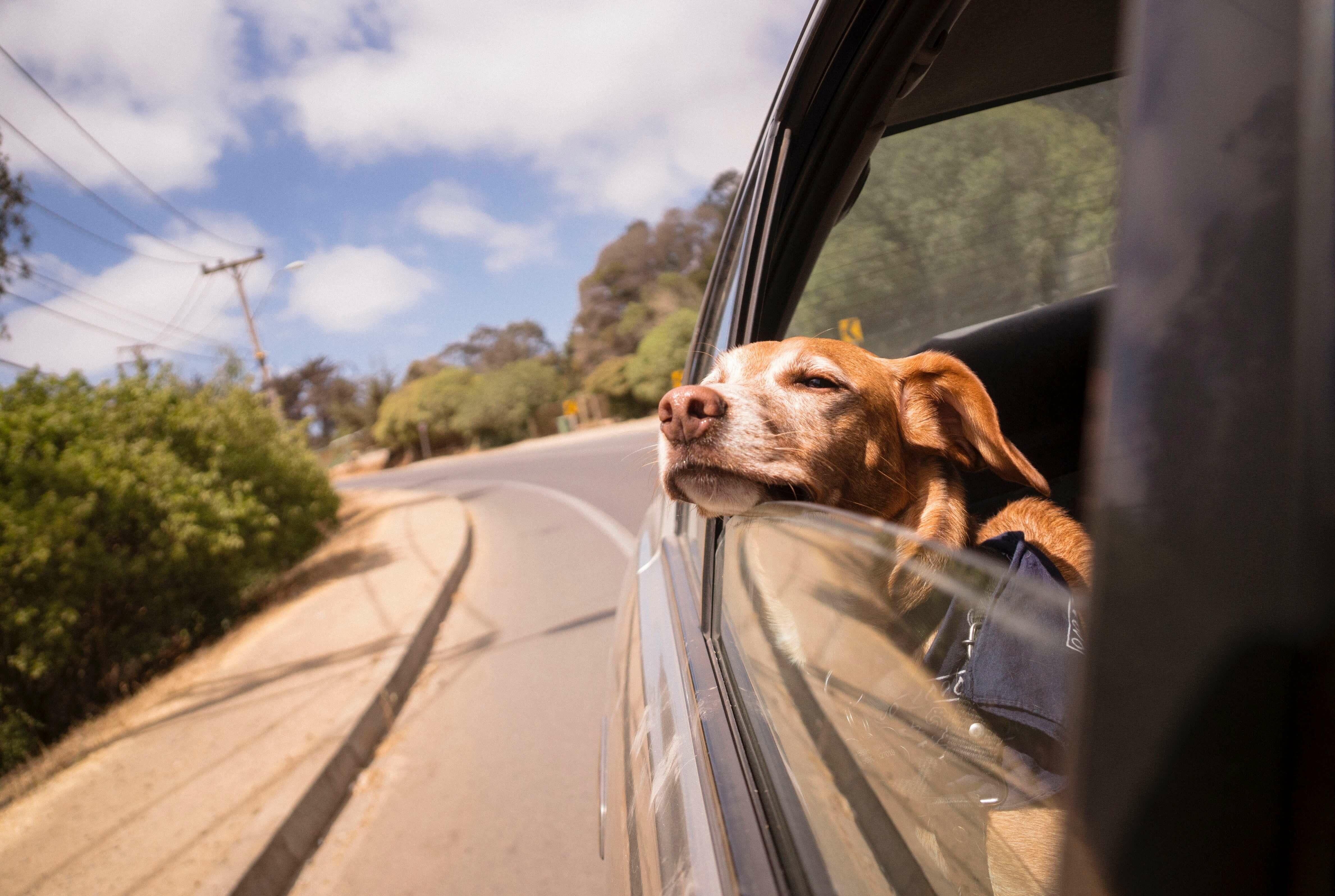 kirándulás kutyával