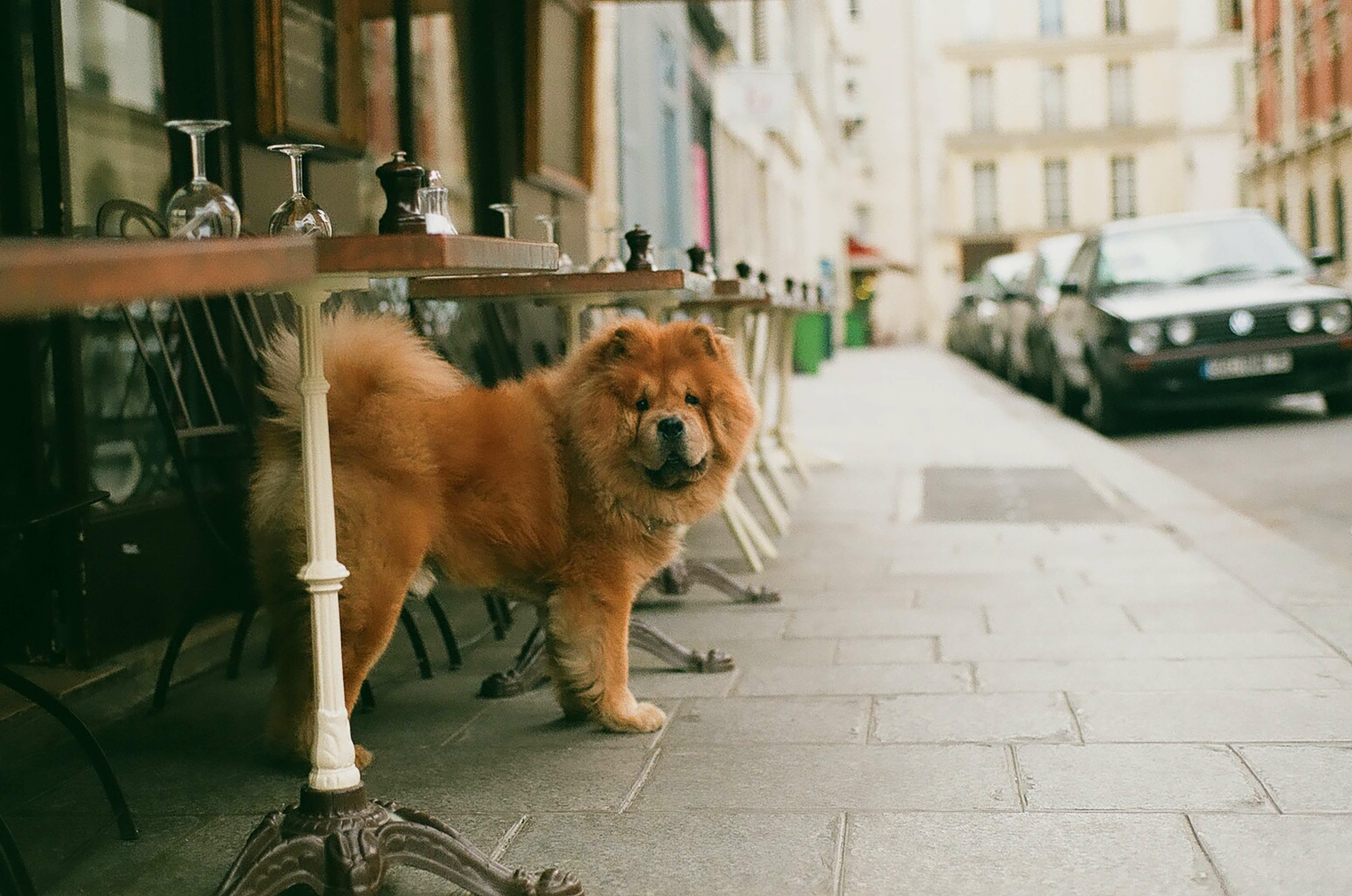 kutyabarát étterem