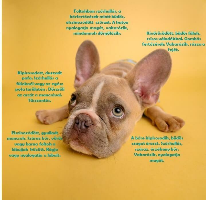 kutya ekcéma kezelése házilag