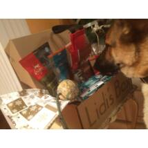 Karacsonyi doboz kistestu kutyanak