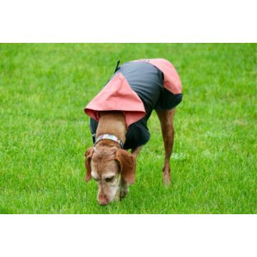 NR Dogs Kutyakabát Rose L