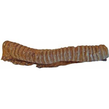 Teomann hosszú marhalégcső 1 db